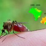 Manejo da resistência a inseticidas
