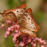 Pode a comunicação química entre organismos ser interrompida por poluentes?