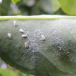 O problema da resistência aos pesticidas